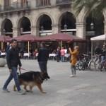 Собаки Барселоны