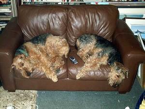emilydorothy_couch_big
