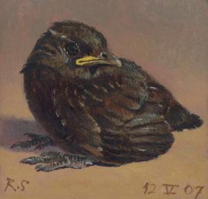 101912_robin-shillcock