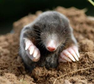 010413_mole