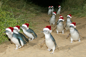 122614_santa-penguins