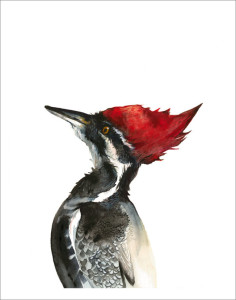 etsy_pileated-woodpecker