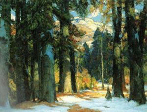 John-F-Carlson_forest