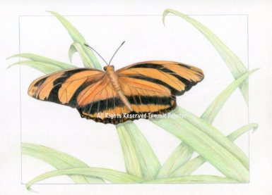 """""""Orange Butterfly"""" 9 x12"""" Colored pencil on Bristol"""
