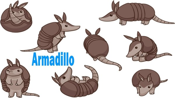 how to draw an armadillo # 14