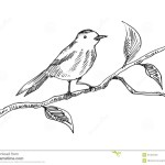Bird On A Branch Drawing Easy