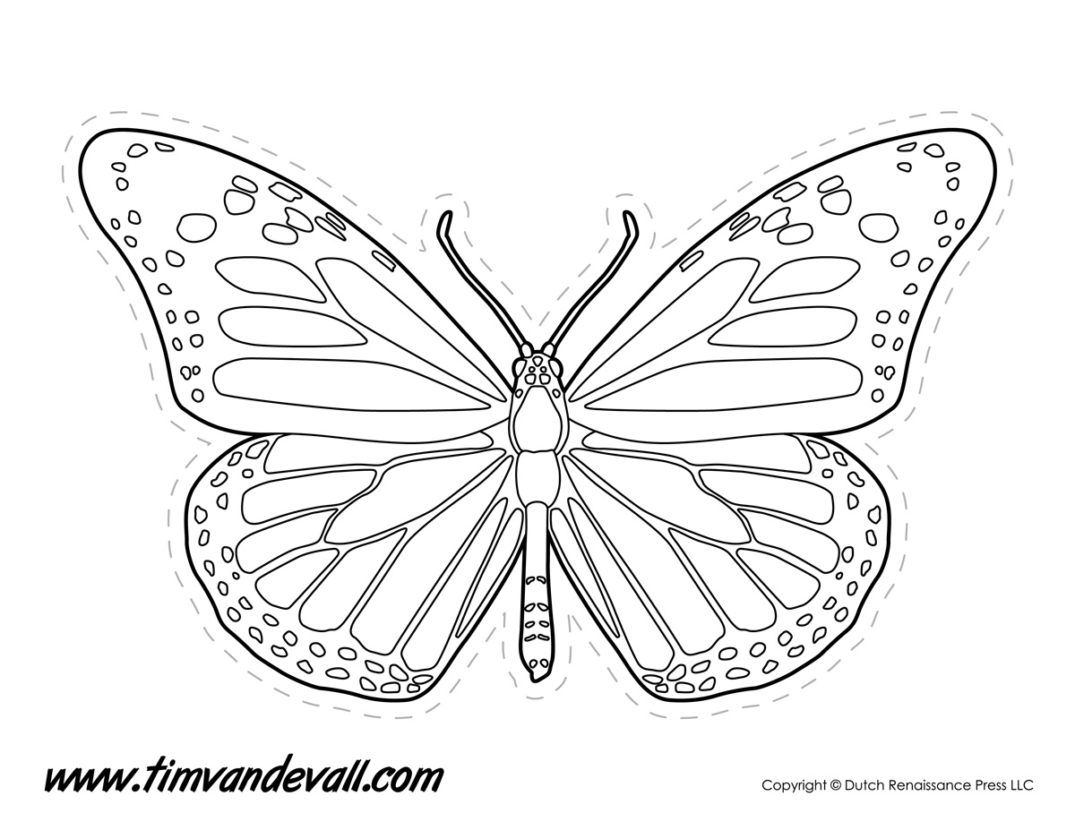 Butterfly Line Drawing At Paintingvalley