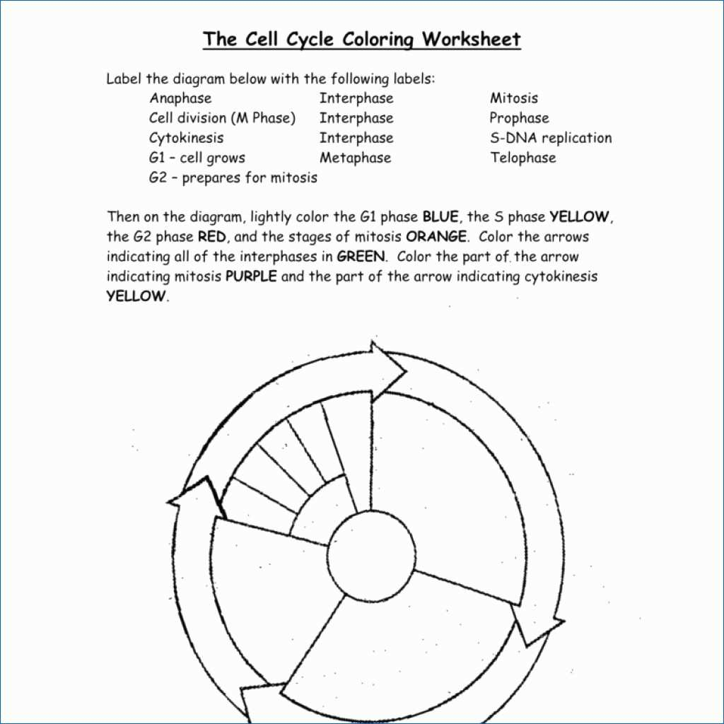 The Eukaryotic Cell Cycle And Cancer Worksheet Answers