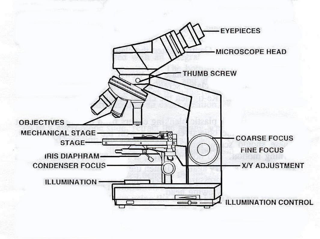 Compound Microscope Drawing At Paintingvalley