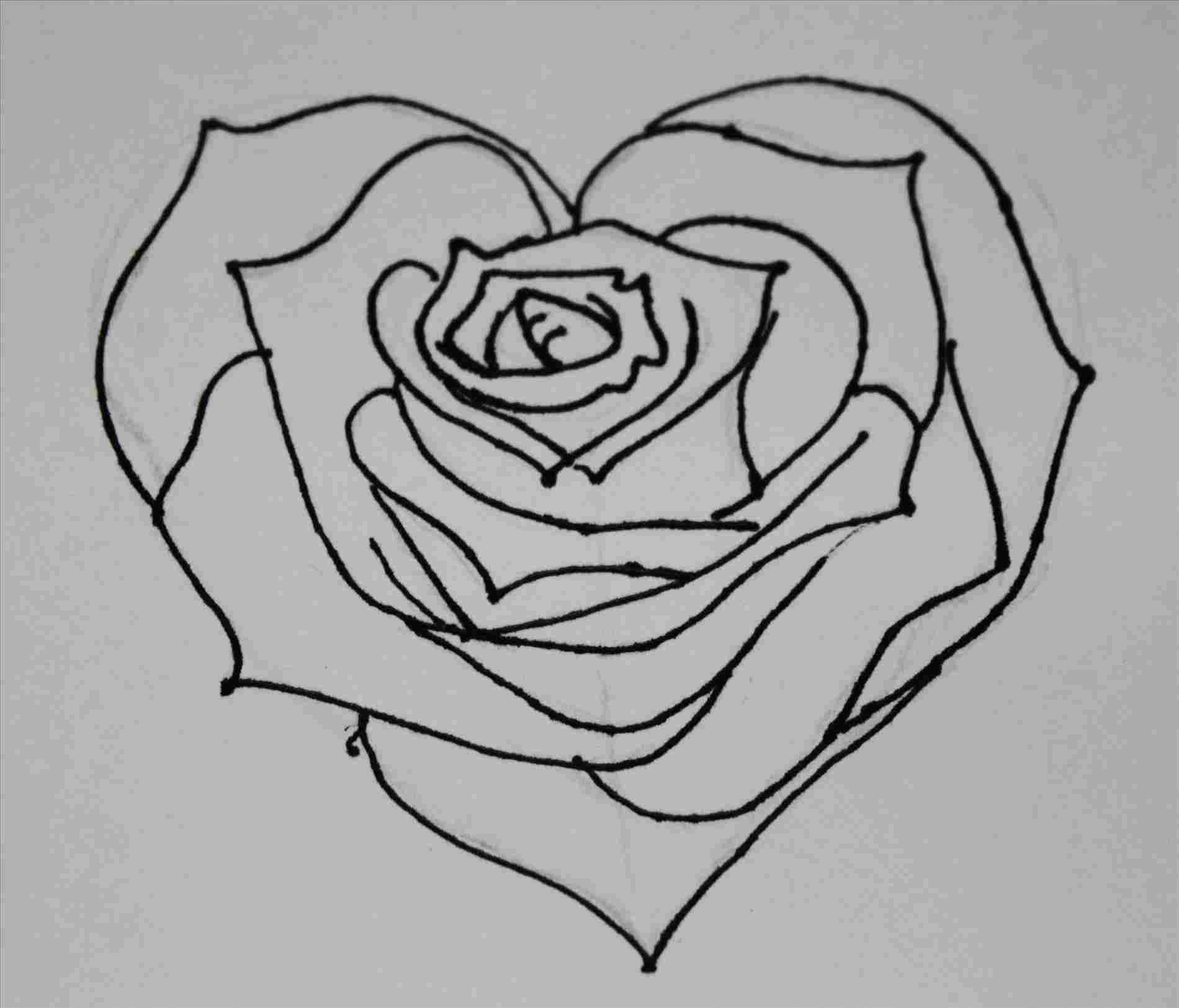 Pencil Sketches Of Hearts And Roses Chelss Chapman
