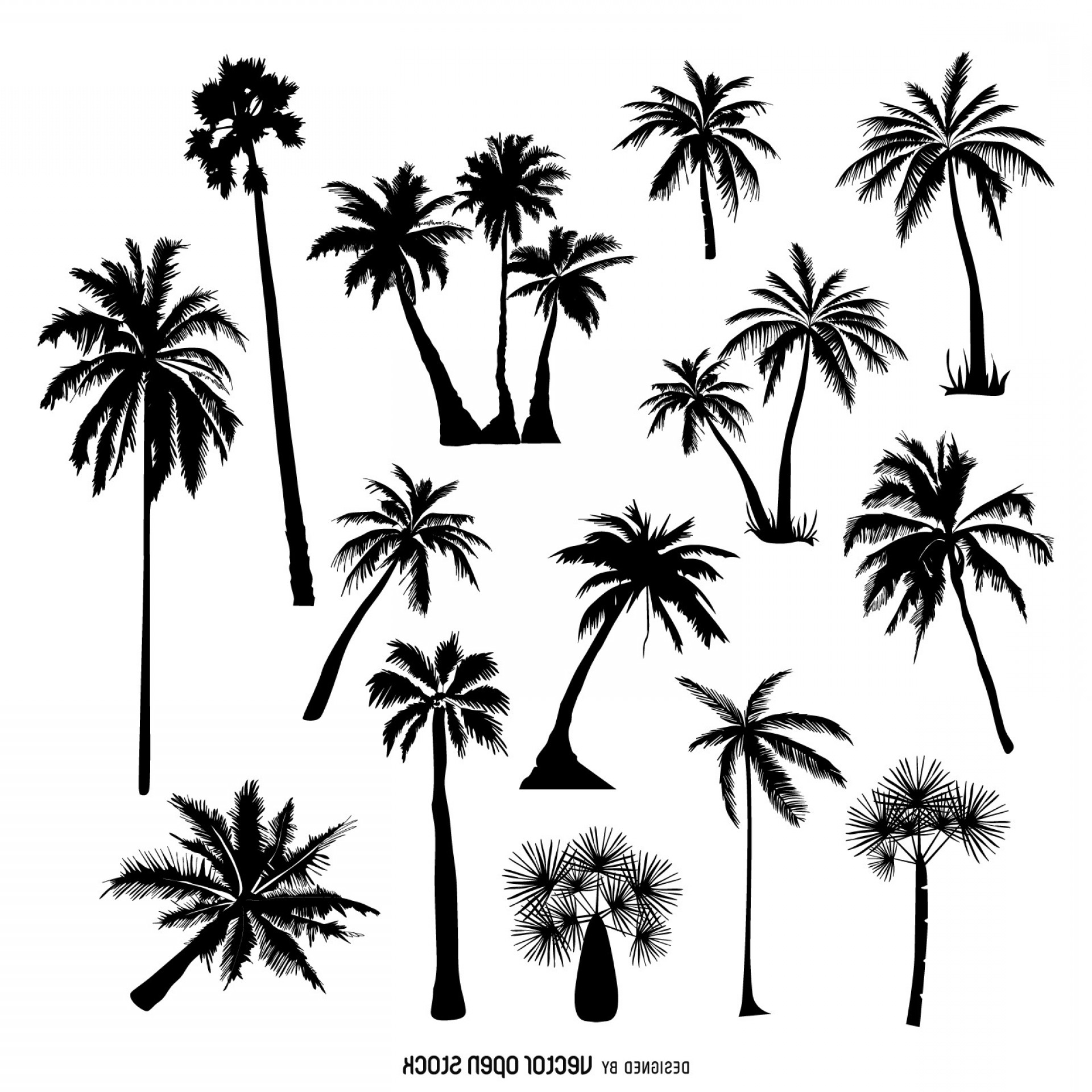Line Drawing Of A Palm Tree At Paintingvalley