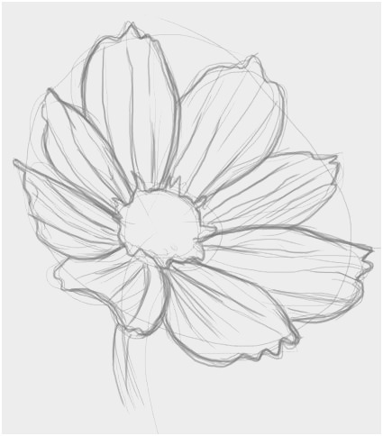 How To Draw A Flower Step By Step Daryl Hobson Free Photos