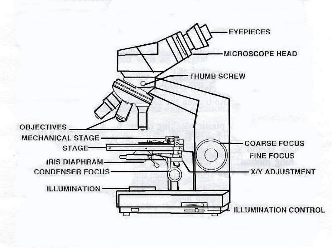Compound Microscope Sketch At Paintingvalley