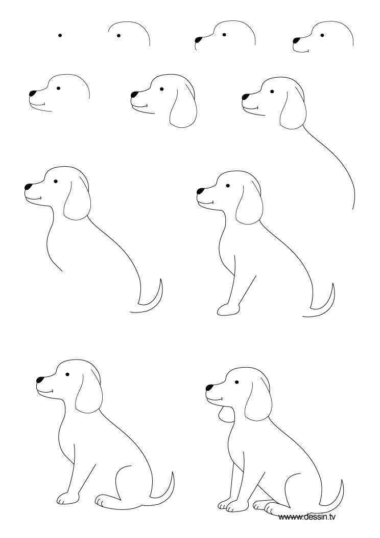 Sketches Of Animals Step By Step Chelss Chapman