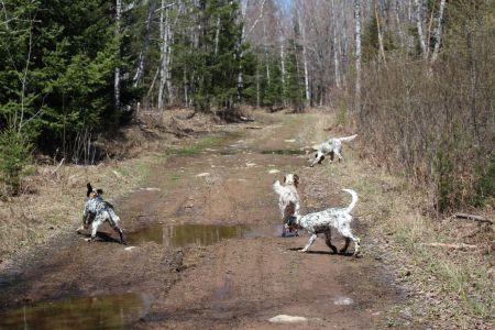 80 acre trail