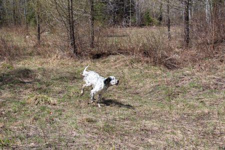 Pix on the run