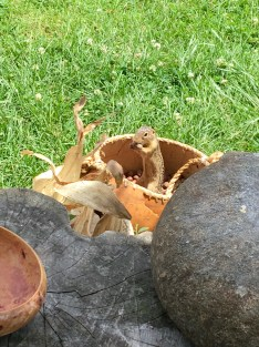 One of our first visitors was a ground squirrel attracted to a basket of hazelnuts used as an exhibit. Villagers would sit under the shade shelter in the heat of the day to shell nuts and grind corn.