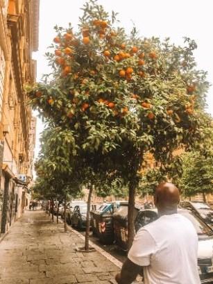 Man looking at a orange fruit tree