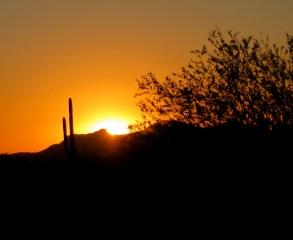 Golden desert sunset