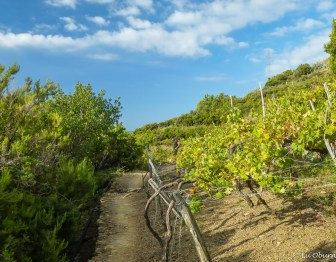 Taking the high trail through vineyards from Volastra to Corniglia.