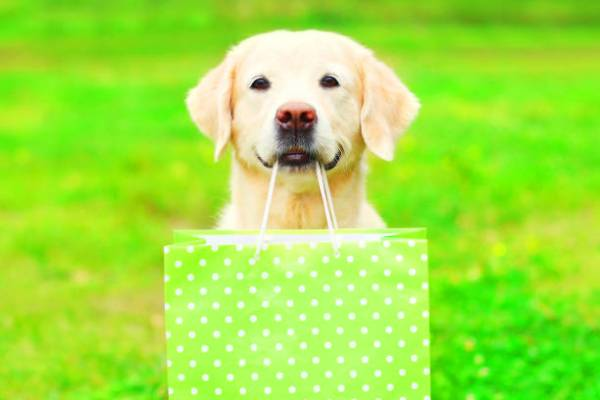 dog with gift bag closer