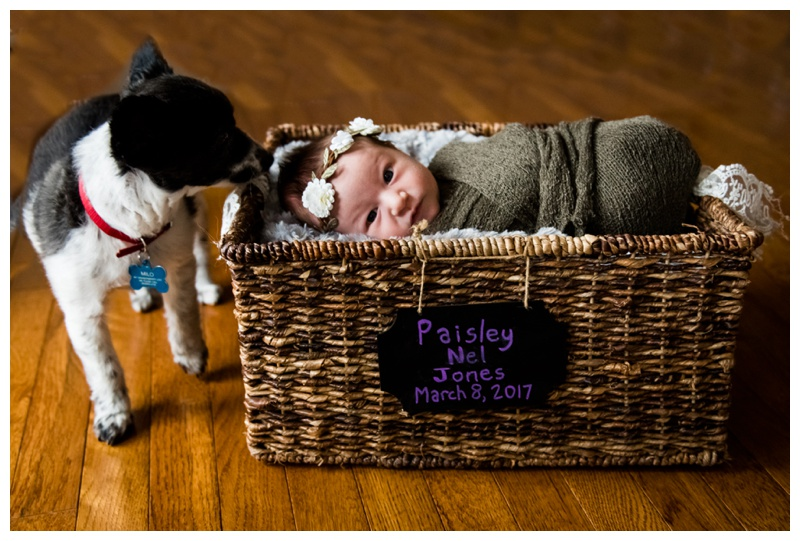 In Home Newborn Photography Okotoks