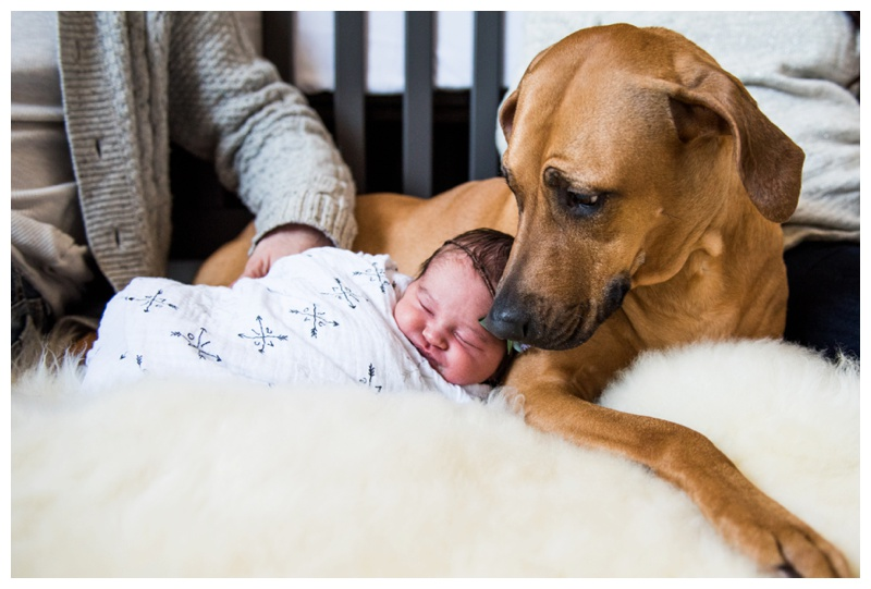Calgary In Home Newborn Photos