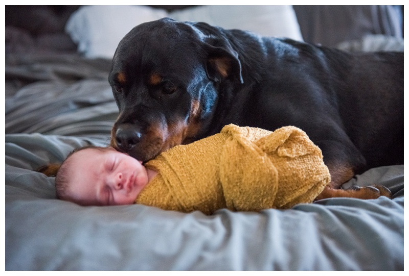 Calgary Newborn Photos In Home