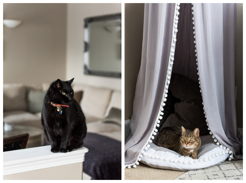 Animals In You Maternity Session - Calgary Maternity Photos