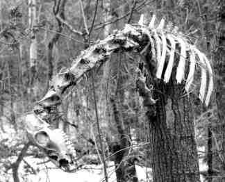 Saugie Skeleton found!