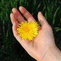 Exemplo aos filhos: 10 gestos de gentileza para praticarmos todo dia - Pai Tem Que Fazer de Tudo