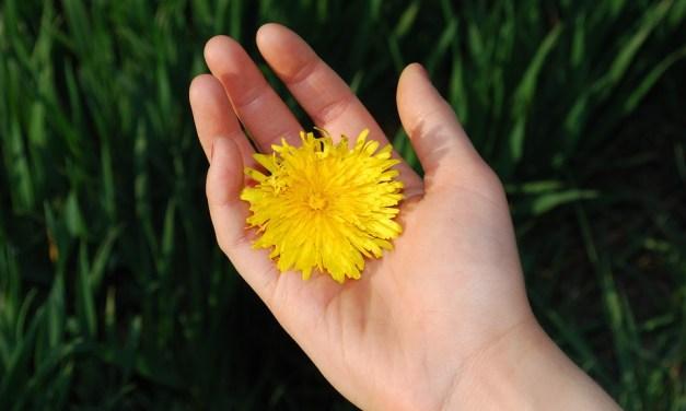 Exemplo aos filhos: 10 gestos de gentileza para praticarmos todo dia