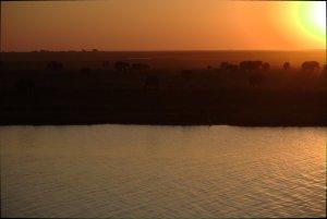 Elefanter i solnedgången