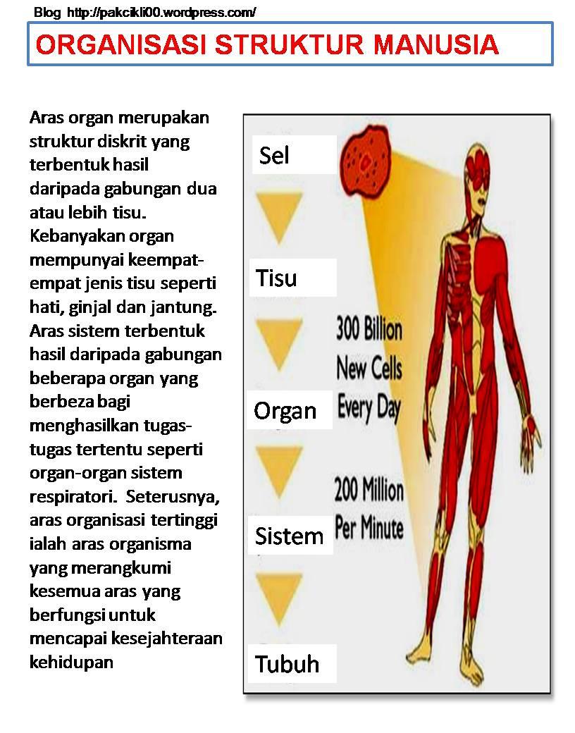 organisasi struktur manusia