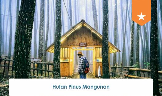 Paket Wisata Jogja 1 Hari Hutan Pinus Mangunan