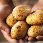 pakistani scientist found new 7 potato kinds