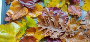 Méhviaszos őszi falevelek borító