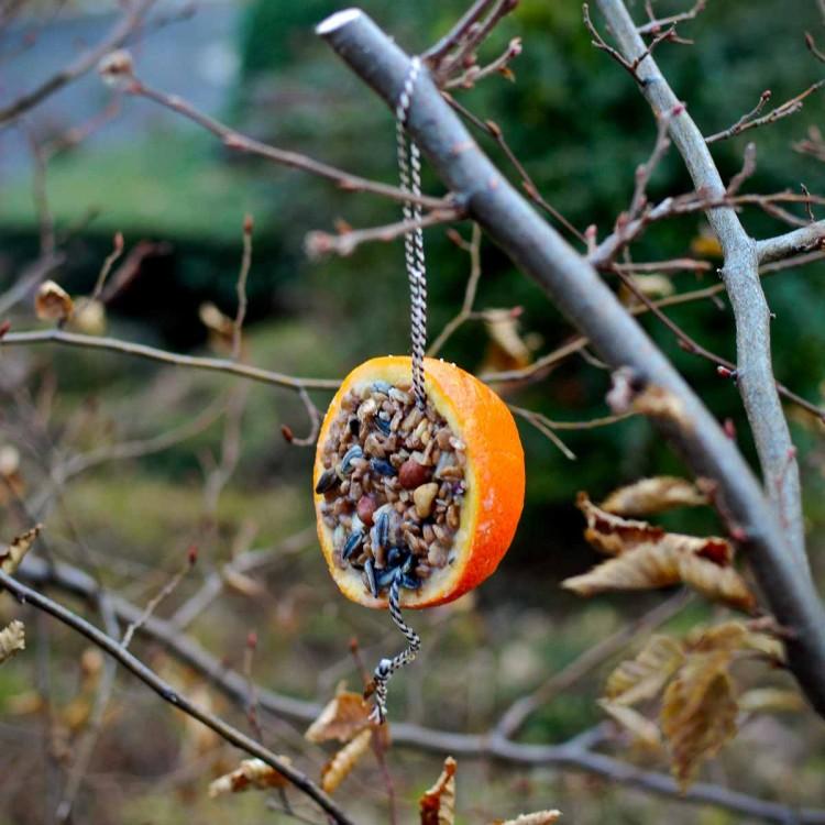 diy bird feed orange