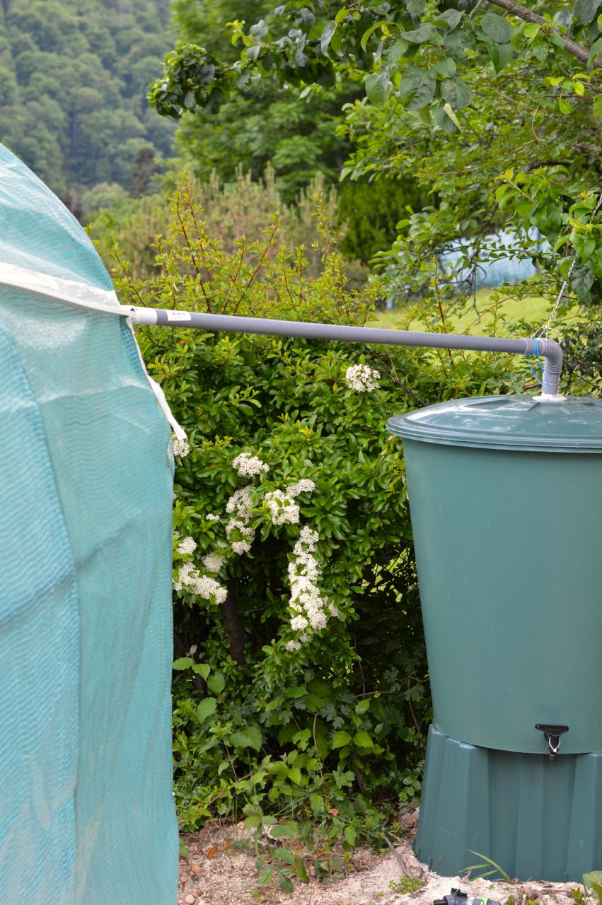 rain water barrel green house