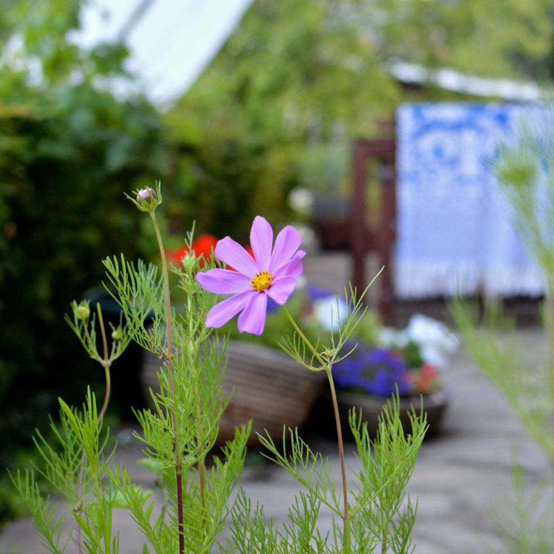 garden update june02