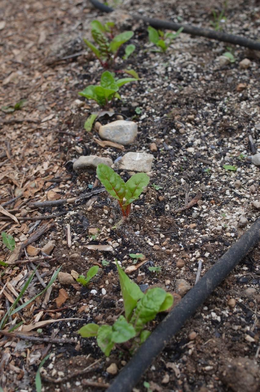 garden update may - 13