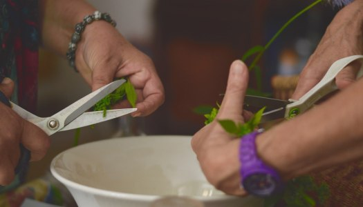 Workshop: foraging wild edible plants at la ferme Lespinasse