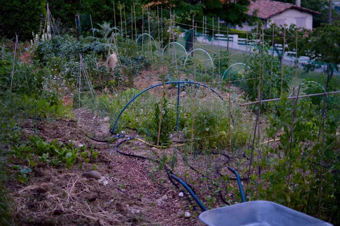 veg patch - pakovska.com