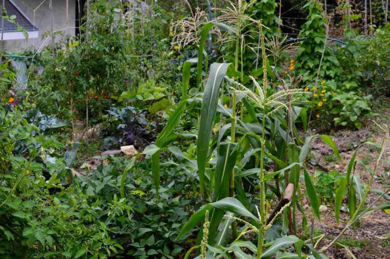 september garden 2015 - 18