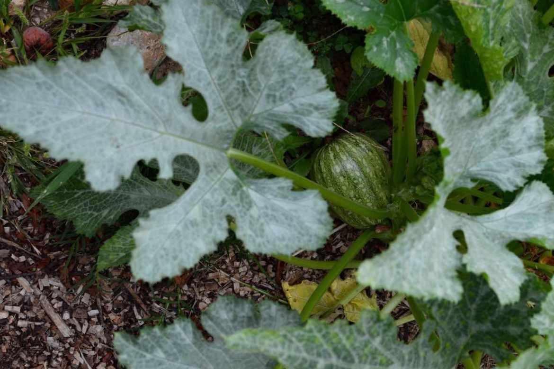 september garden 2015 - 8