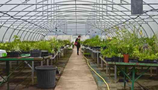 Open farm weekend in France – visit plant-nurseries