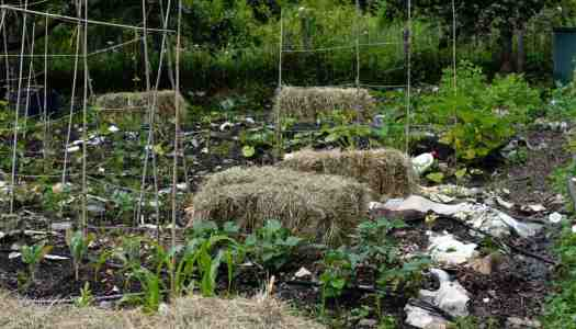 The July allotment 2016