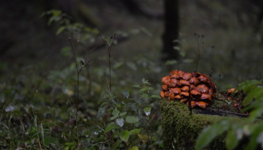 Mushroom picking in autumnal Savoy – a quick introduction