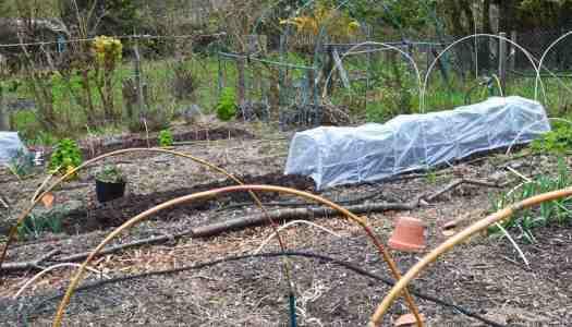 April 2018 garden update