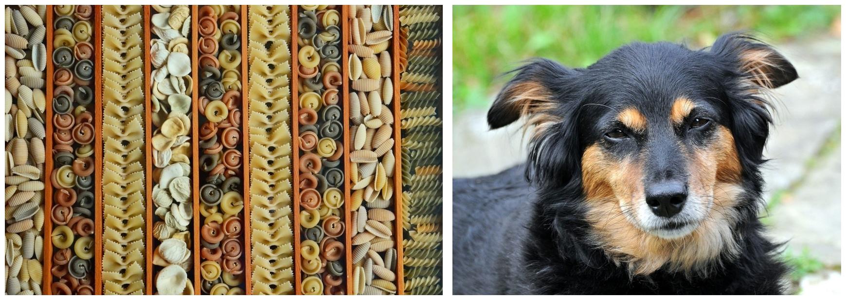 zdjęcie podzielone na dwa pola, w pierwszym różne rodzaje makaronu, w drugim pies kundelek